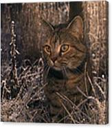 Close View Of A Tabby Cat Canvas Print