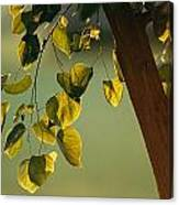 Close View Of A Tree Branch And Leaves Canvas Print