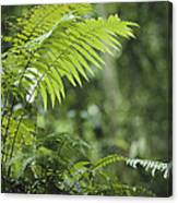Close View Of Ferns In A Papua New Canvas Print