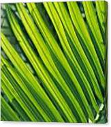 Close View Of Palm Fronds Canvas Print