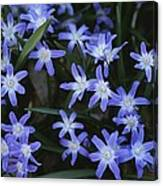 Close View Of Spring Flowers Canvas Print
