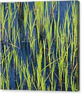 Close View Of Water Grasses Growing Canvas Print