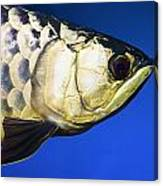 Closeup Of A Fish Canvas Print