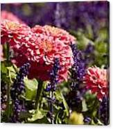 Closeup Of Colorful Flowers In Butchart Canvas Print