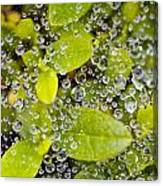 Closeup Of Morning Dew On Leaves Canvas Print