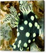 Closeup Of Nudibranch Nembrotha Canvas Print