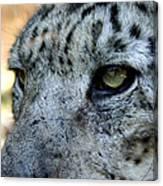 Clouded Leopard Face Canvas Print