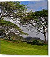 Clouds And Kiawe Canvas Print