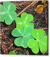 Clovers In The Woods Canvas Print