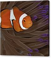 Clownfish In Purple Tip Anemone Canvas Print
