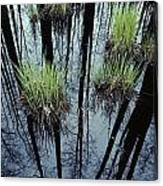 Clumps Of Grass In Water Reflecting Canvas Print