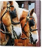 Clydesdale Closeup Canvas Print
