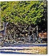 Co Habitating Canvas Print