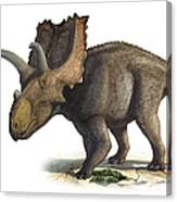 Coahuilaceratops Magnacuerna Canvas Print