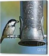 Coal Tit On Feeder Canvas Print