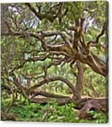 Coast Live Oak Canvas Print