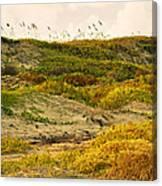 Coastal Plants On Dunes Canvas Print
