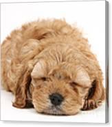 Cockapoo Pup Canvas Print