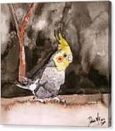 Cockatiel Canvas Print