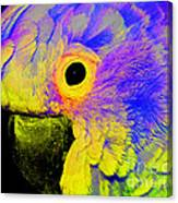 Cockatoo Of A Different Color Canvas Print