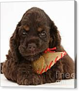 Cocker Spaniel Pup With Chew Treat Canvas Print