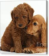 Cocker Spaniel Puppy And Goldendoodle Canvas Print