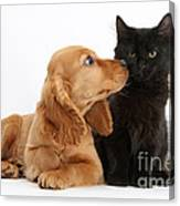 Cocker Spaniel Puppy And Maine Coon Canvas Print