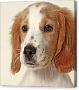 Cocker Spaniel Puppy Canvas Print