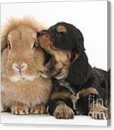 Cockerpoo Pup And Lionhead-lop Rabbit Canvas Print
