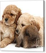 Cockerpoo Puppies And Rabbit Canvas Print