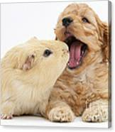 Cockerpoo Puppy And Guinea Pig Canvas Print