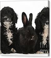 Cockerpoo Pups And Rabbit Canvas Print