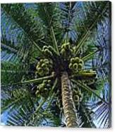 Coconut Palm Canvas Print