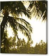 Coconut Palm Trees On The Coast Canvas Print