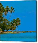 Coconuts Anyone Canvas Print