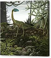 Coelophysis Dinosaurs Walk Amongst Canvas Print