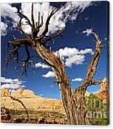 Cohab Canyon Overlook Canvas Print
