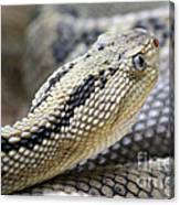 Coiled In Wait Canvas Print