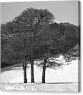 Cold And Bare. Canvas Print