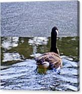 Cold Swim In The Pond Canvas Print