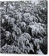 Cold Winter Snow Canvas Print