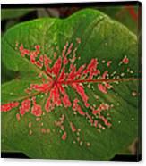 Colius Leaf Canvas Print