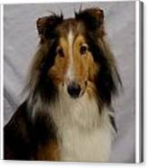 Collie 111 Canvas Print
