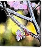Color 62 Canvas Print