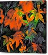 Color 92 Canvas Print