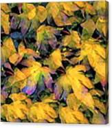 Color 93 Canvas Print