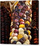 Color Corn Canvas Print