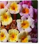 Color Explosion Flowers Canvas Print