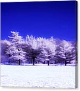 Color Infrared Winter Trees Canvas Print