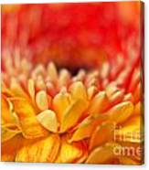 Color Of Summer II Canvas Print